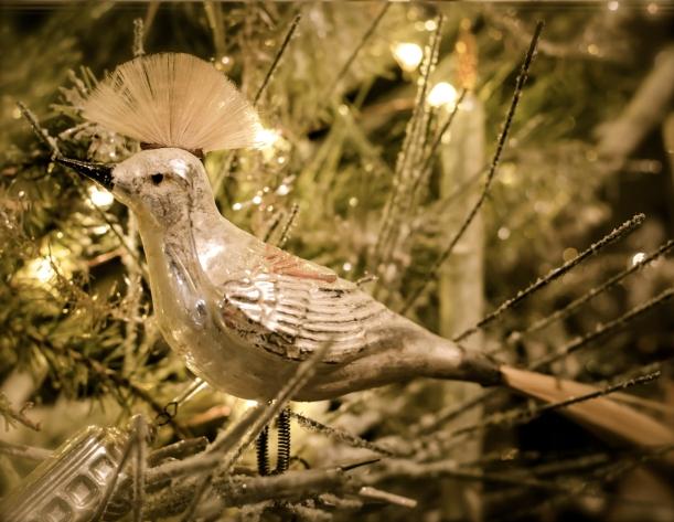 """""""Mohawk Bird""""  :)"""